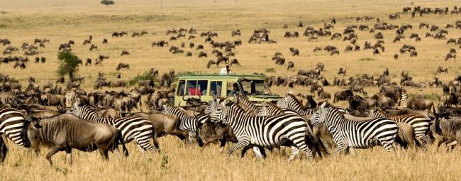 Choosing the safari