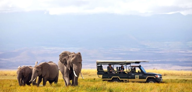 Planning an African Safari – The Things You Must Know
