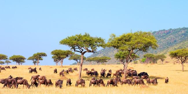When to go for the safari