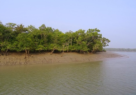 Mangroves of Sundarbans, West Bengal