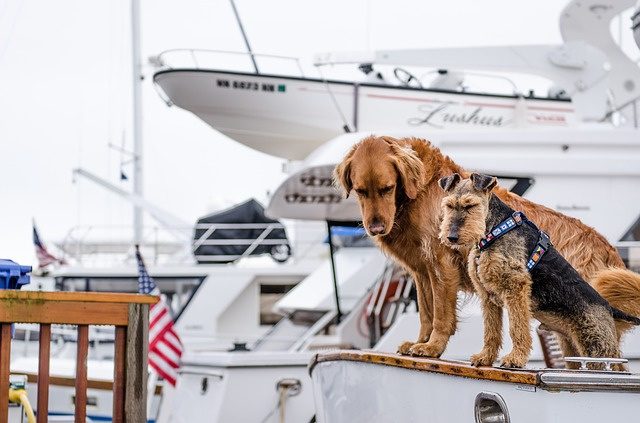 Boating with Your Dog Has Never Been Easier Until Now