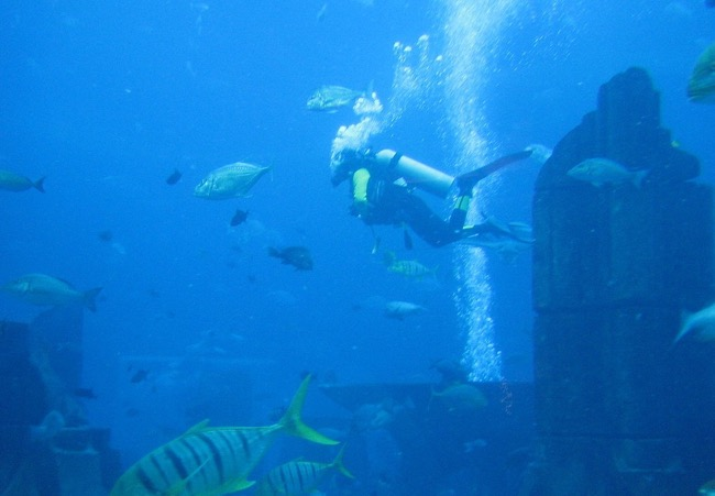 Dubai Aquarium Diving experience