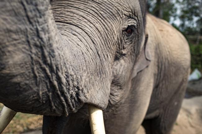Elephant Sanctuaries vs. Elephant Trekking: What's the Difference?