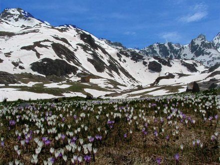 French Southern Alps Flowers