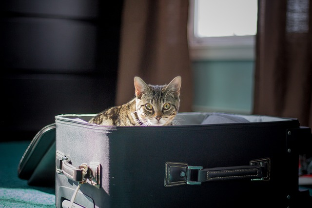 How To Get Your Pet Ready For Airplane Travel