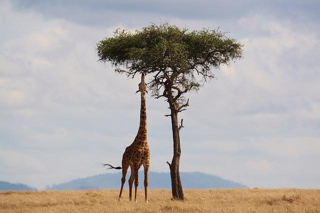 Top Things to Do When Visiting Kenya