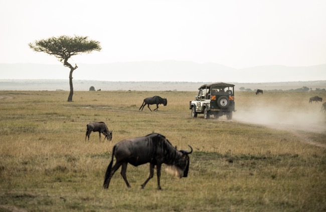 Things to Know When You Are Going on a Safari Trip