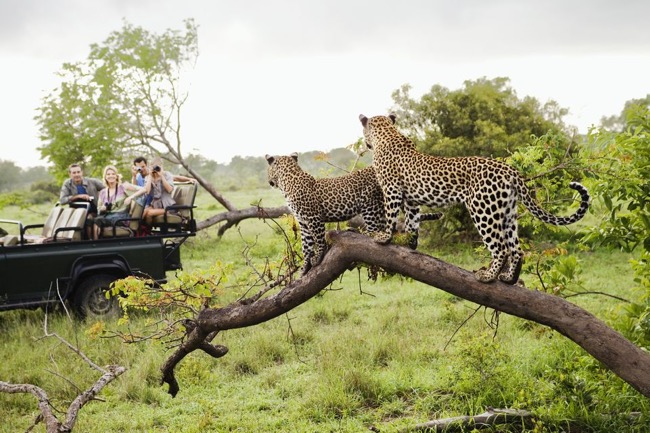 Kruger National Park Safari – South Africa