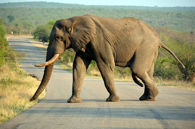 Rules and regulations of the Kruger National Park