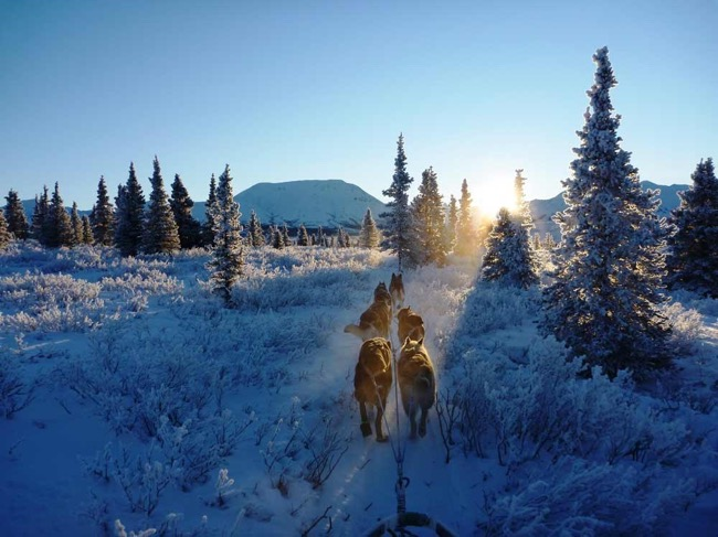 A Brief Guide to Surviving The Harsh Cold Winter in The Wilderness