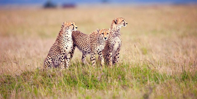 Serengeti National Park Safari – Tanzania