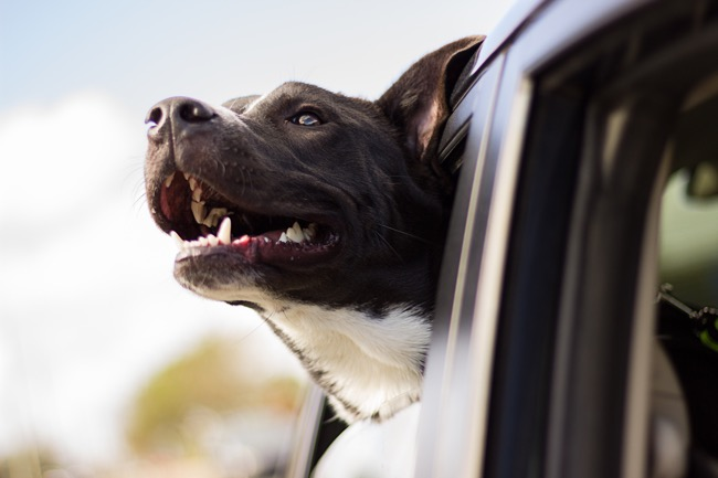 How to Travel With Pets Around the World Without Problems