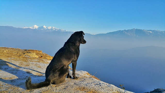 Travelling with Pets: How to Keep Them Safe