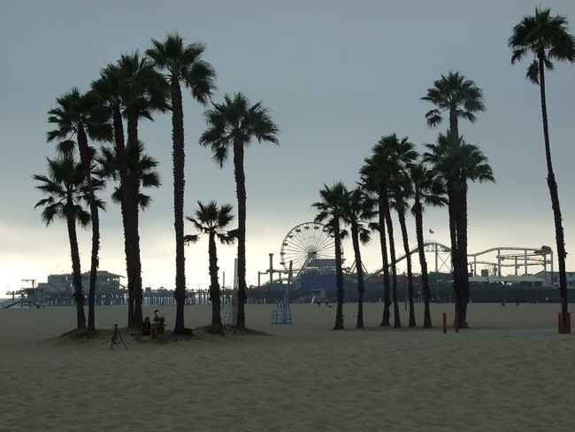 Palm trees on Santa Monica beach, with a view of Pacific Park in the background