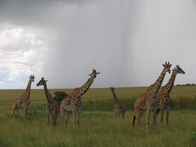 Why you should visit Maasai Mara at least once in your lifetime