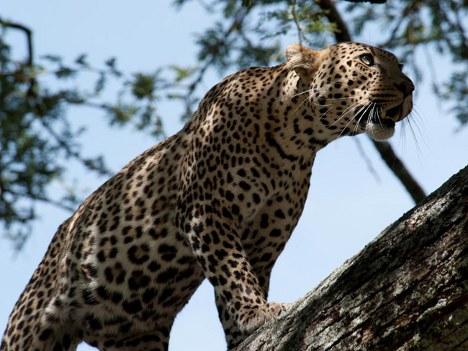 Eastern Sun Tours & Safaris