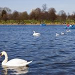 The best parks and green spaces for travellers to visit in London