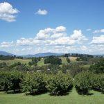 Visiting Australia's best wine producing regions