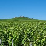 Popular wine tours in France
