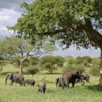 Why Winter Is the Perfect Safari Season in Africa