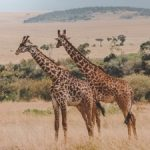 Discovering Kenya – One Nature Reserve At a Time
